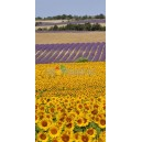 D 007 SUNFLOWERS